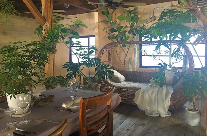 木のぬくもりと植物が織りなすナチュラル空間
