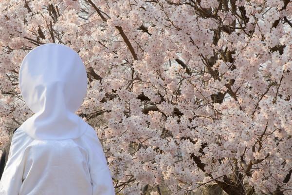桜と白無垢の花嫁